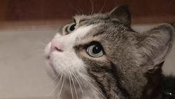 Elvis Gratton, chat Gouttière