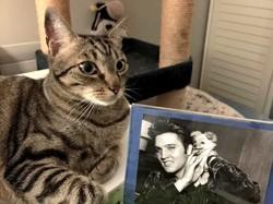 Elvis, chien Berger belge