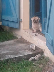 Elwood, chien