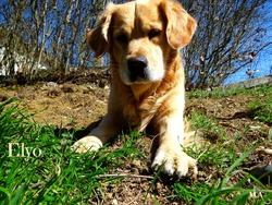 Elyo, chien