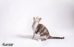 Ember, chat Gouttière