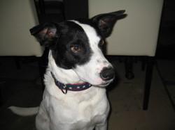 Emile, chien