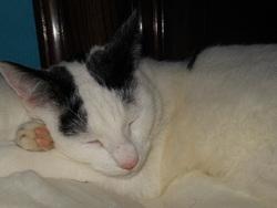 Emjie, chat Gouttière