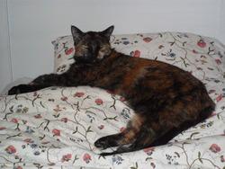 Emmy, chat Gouttière