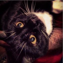 Engel, chat Gouttière