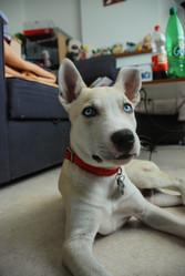Enoch, chien