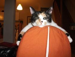 Enya, chat Gouttière