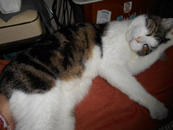 Enzo, chat Gouttière