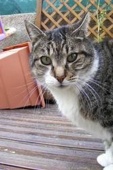 Enzo , chat Gouttière