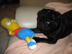 Enzo, chien
