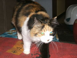 Epice, chat Gouttière