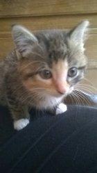 Epona, chat Gouttière