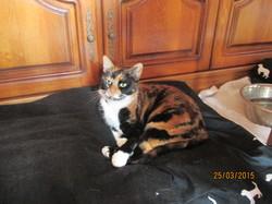 Erbalunga, chat Européen