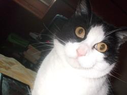 Ernest, chat