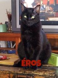 Eros, chat Européen