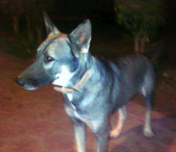 Esawes Keaslths, chien Chien-loup tchèque