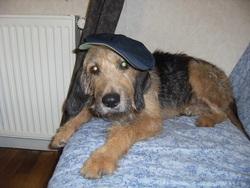 Esope, chien