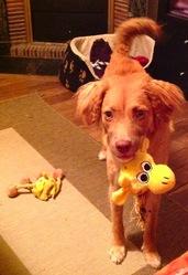 Essie, chien