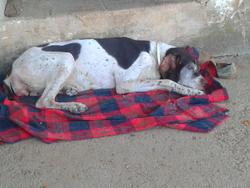 Estrella, chien
