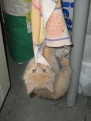 Etincelle, chat