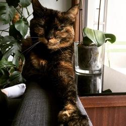 Etna, chat