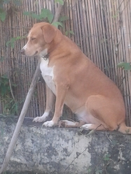 Etoile, chien