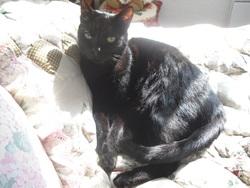 Etoile, chat Gouttière