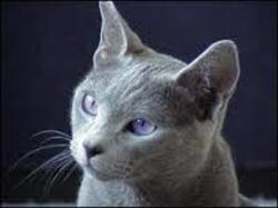Étoile Bleue, chat Gouttière