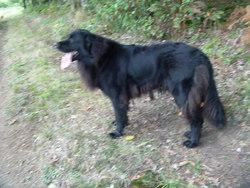 Eurka, chien Terre-Neuve