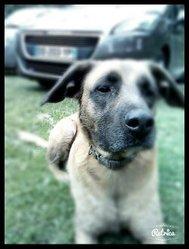Evy, chien