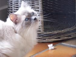 Ewen, chat
