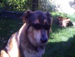 Expresso, chien