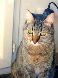 Eycho, chat Gouttière