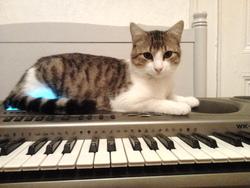 Ezéchiel, chat Gouttière