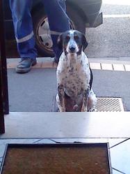 Veinard, chien