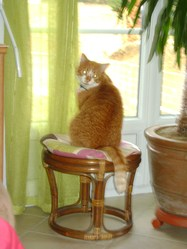 Mistigri, chat
