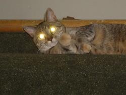 Mika, chat Gouttière