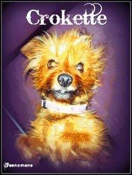 Crokette, chien Yorkshire Terrier