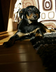 Effy, chien
