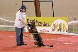 Brenda, chien Berger allemand