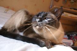 Pucette, chat