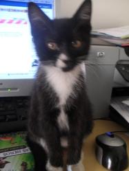 Ptite Fleur, chat