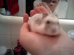 Rammstein, rongeur Hamster
