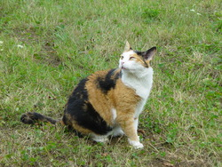 Poupy, chat Gouttière