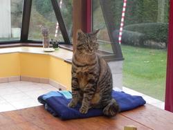 Kaou, chat Gouttière