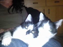 Margot Et Choupette, chat