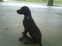 Shaft, chien