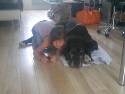 Bastia, chien Dogue allemand