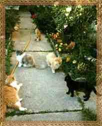 Promenade, chat Persan