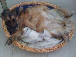Croquette, chien